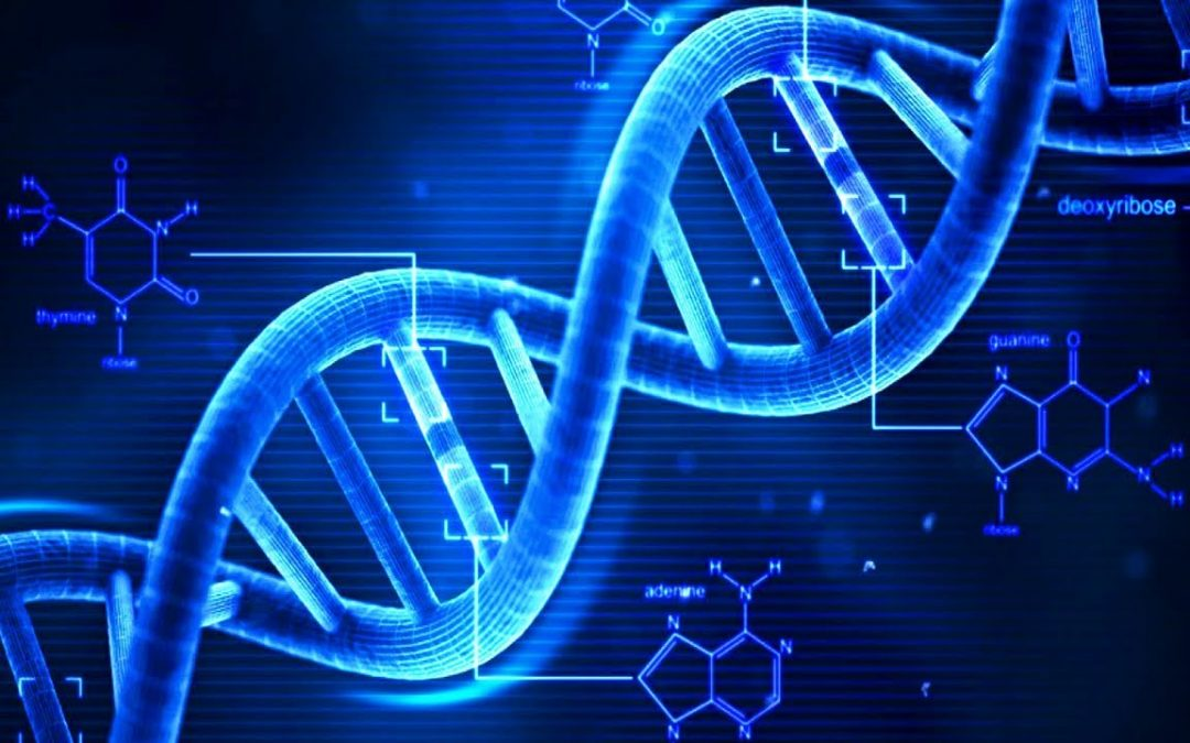 DNA – Coded Information at the Core of our Cells